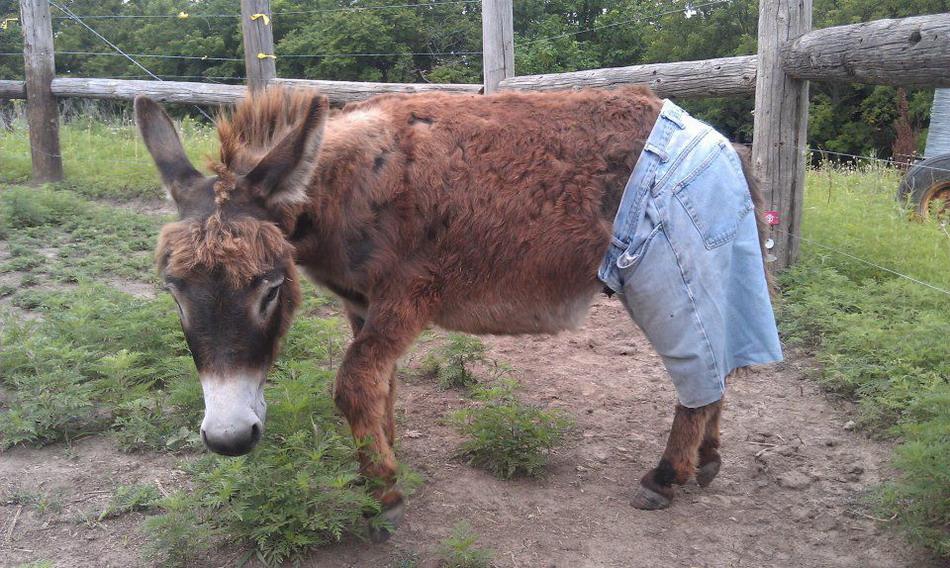 Cтранные штаны