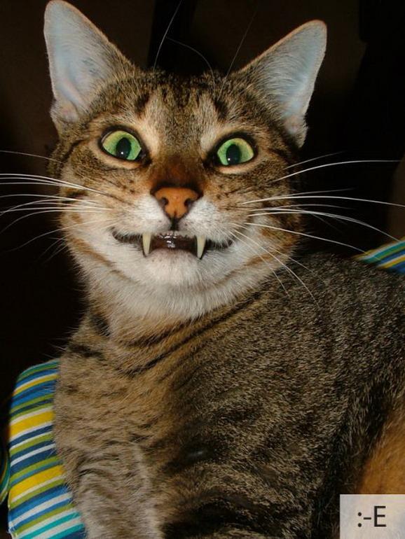 Забавные эмоции котов
