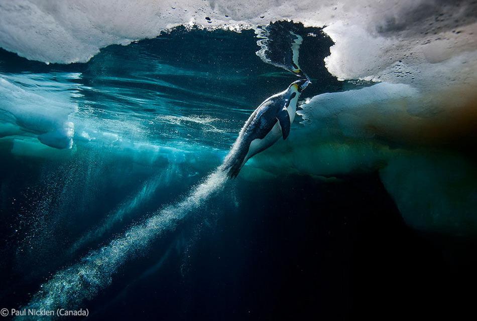 Лучшие фотографии Природы и Окружающей среды