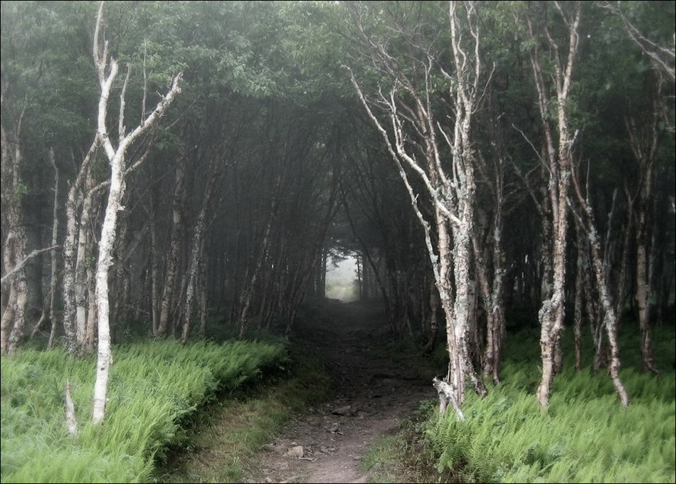 http://www.catsmob.com/post/2012/11/01963/scary_forests_01963_002.jpg