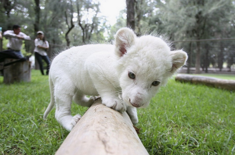 Забавные фото Животных