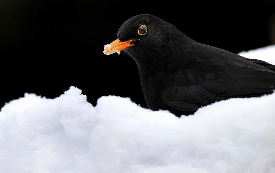 красивейших зимних фотографий