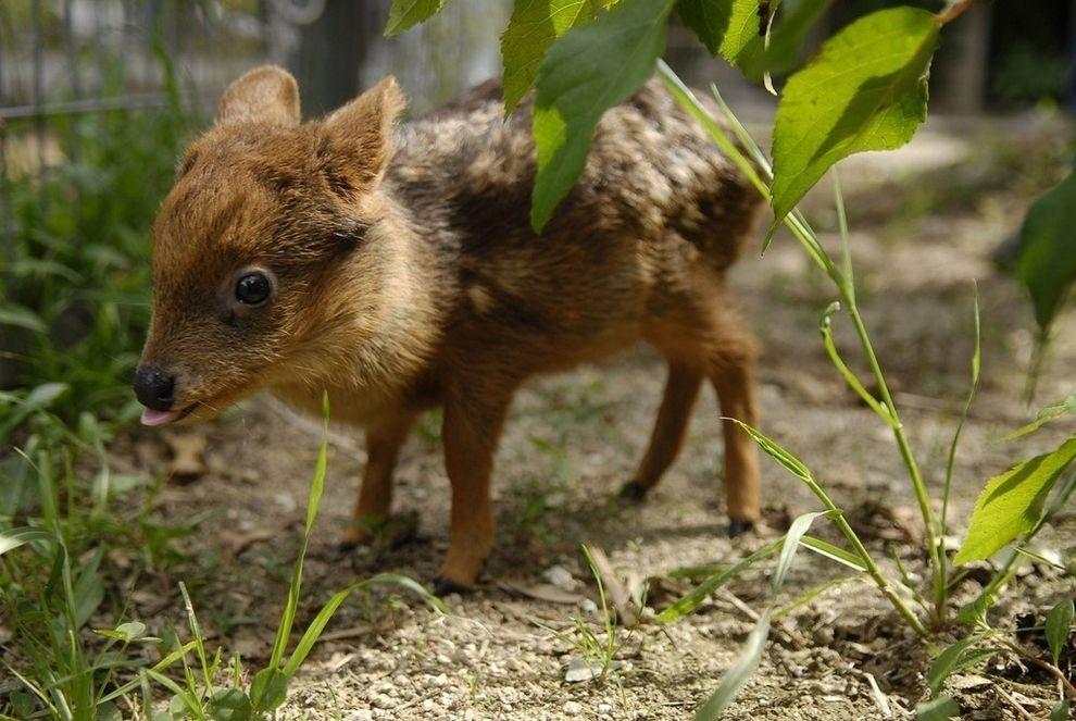Лучшие фотографии животных в 2012 году