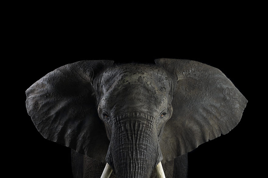 Студийные портреты животных