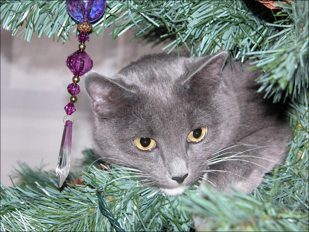 Коты и Новый Год