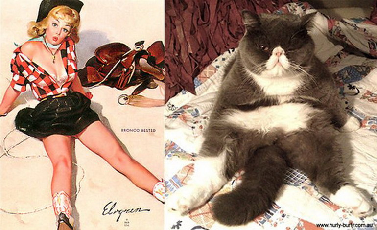 Девушки и коты в стиле Пин-Ап