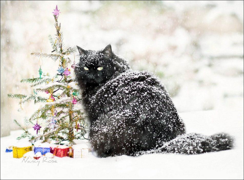 Коты и снег