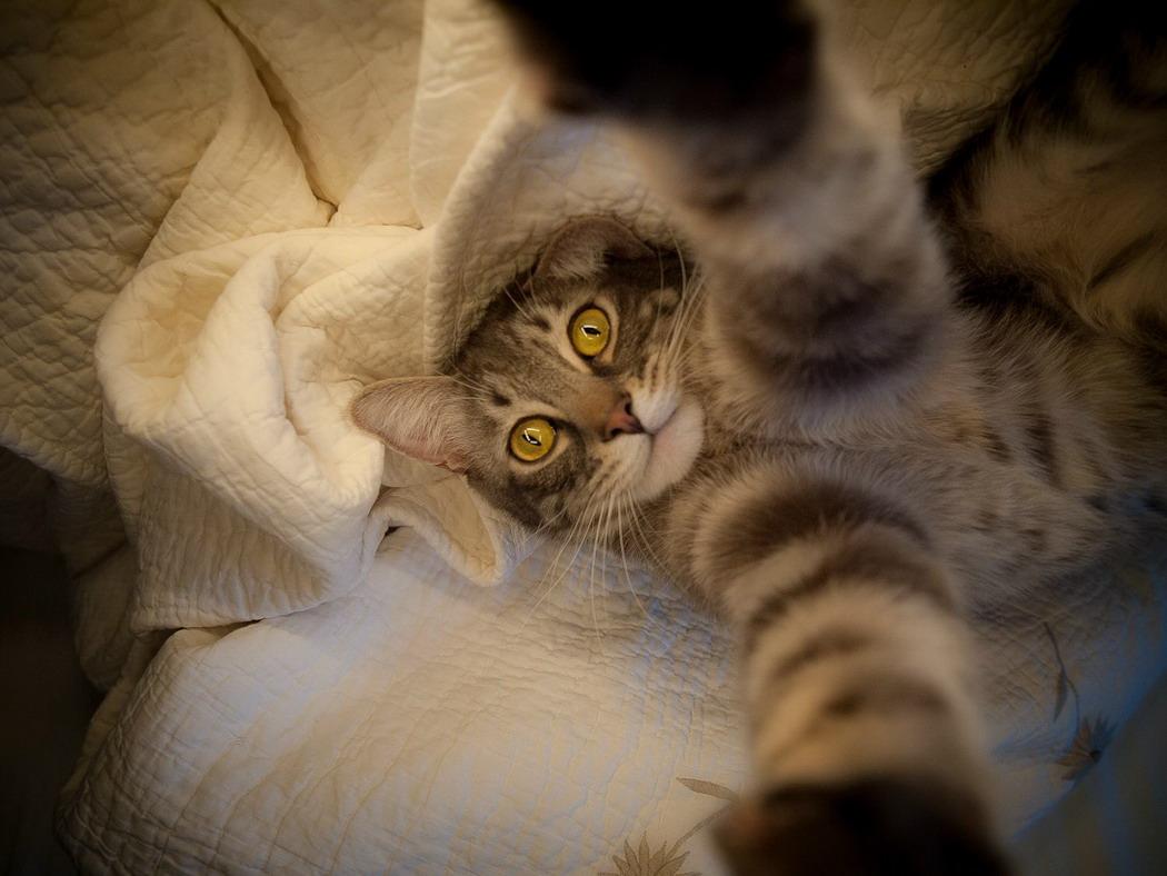 Смешные котики фото на аву