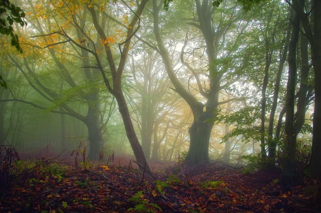 Сказочный лес фотографа janek sedlar 22 фото