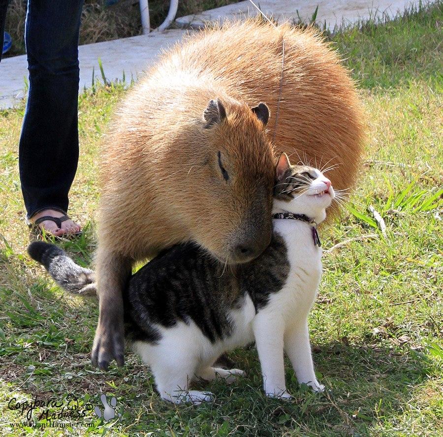 Интересные фото Животных