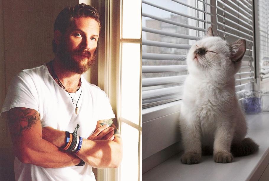 Мужики и коты