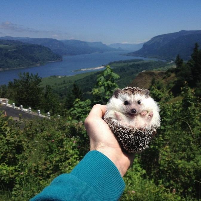 Ежик - путешественник