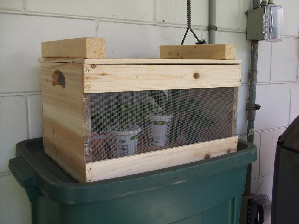 Выращивание бабочек в домашних условиях