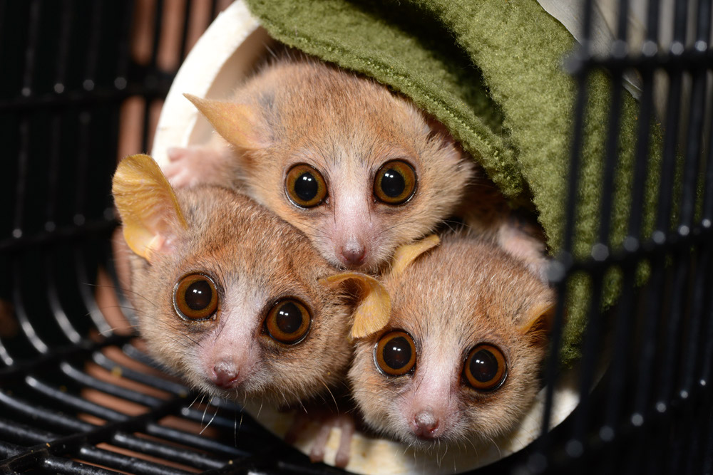 фото Животных