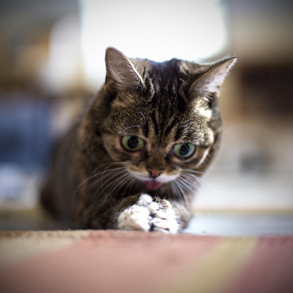 Вечный котенок
