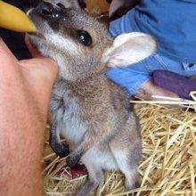 Веселые и милые фотографии Животных