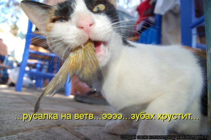 котоматрицы