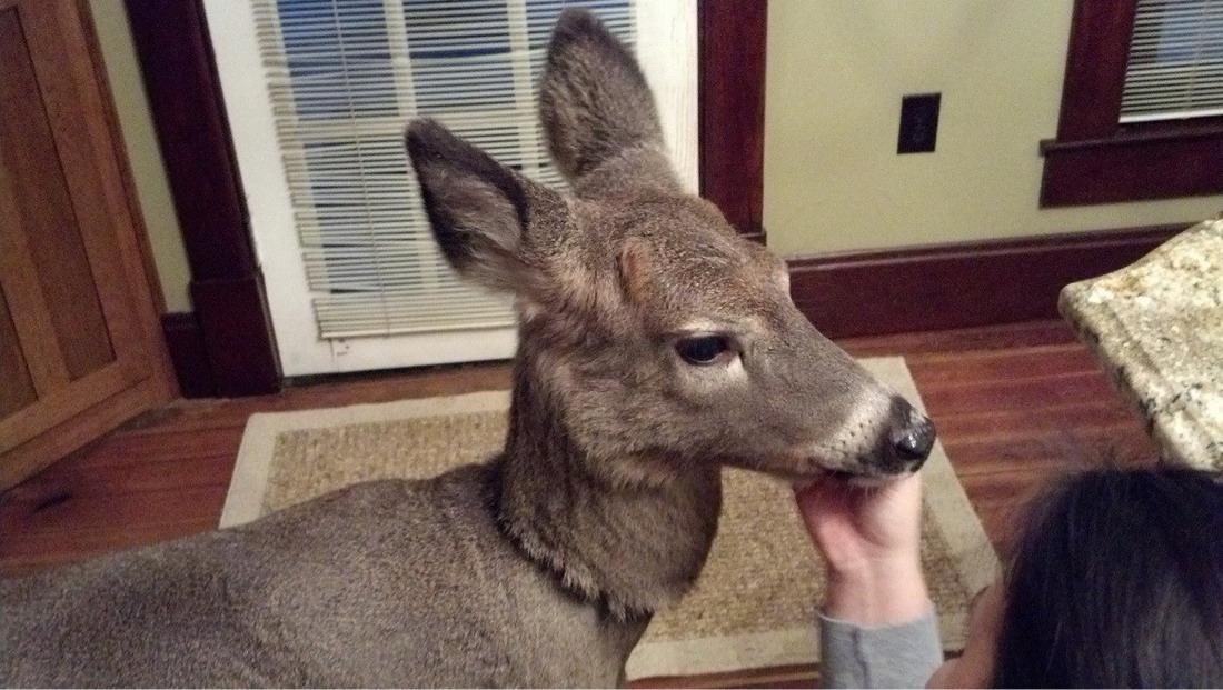 фотографии Животных