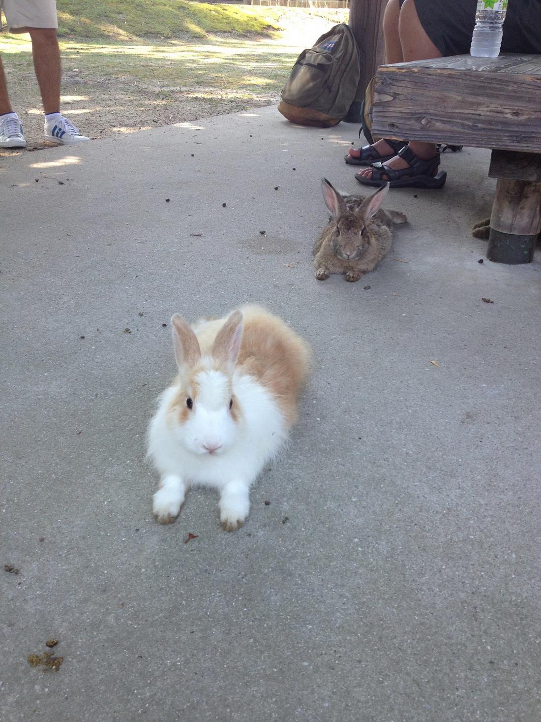 Остров кроликов