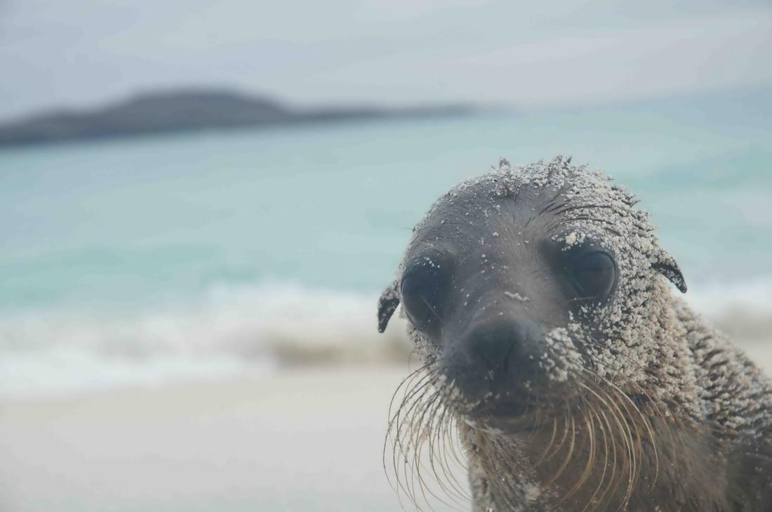 интересные и забавные фотографии животных