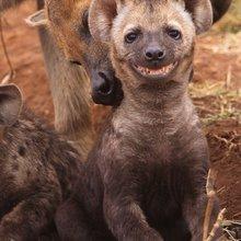 интересные фотографии животных