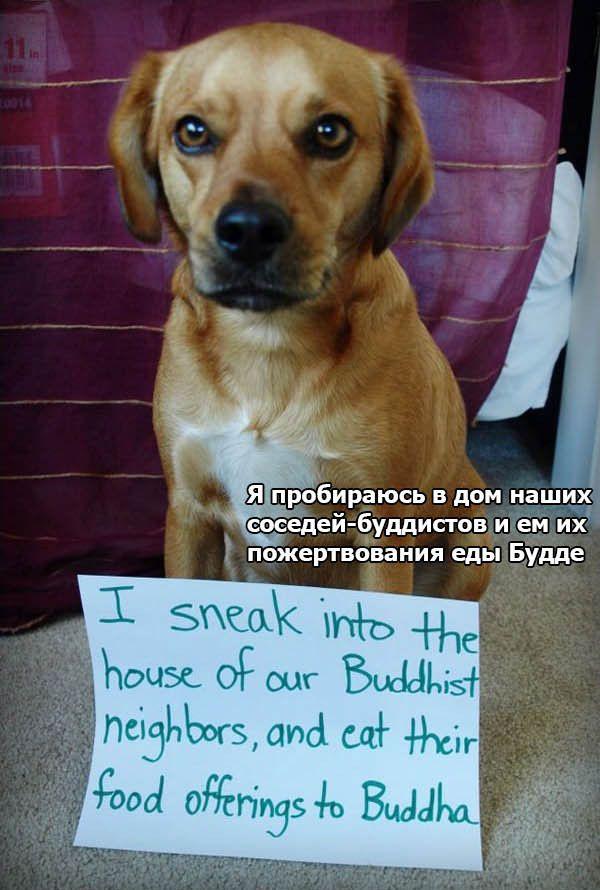 Признания собак