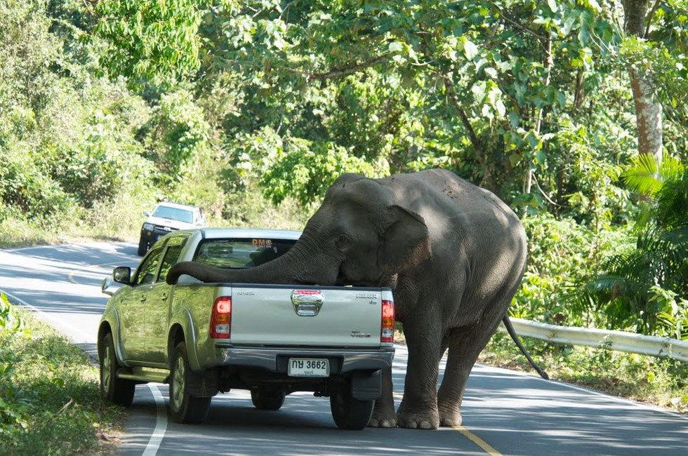 Один из лучших парков Таиланда - Кхауяй