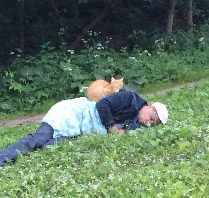 Кошки всегда находят странные но уютные места