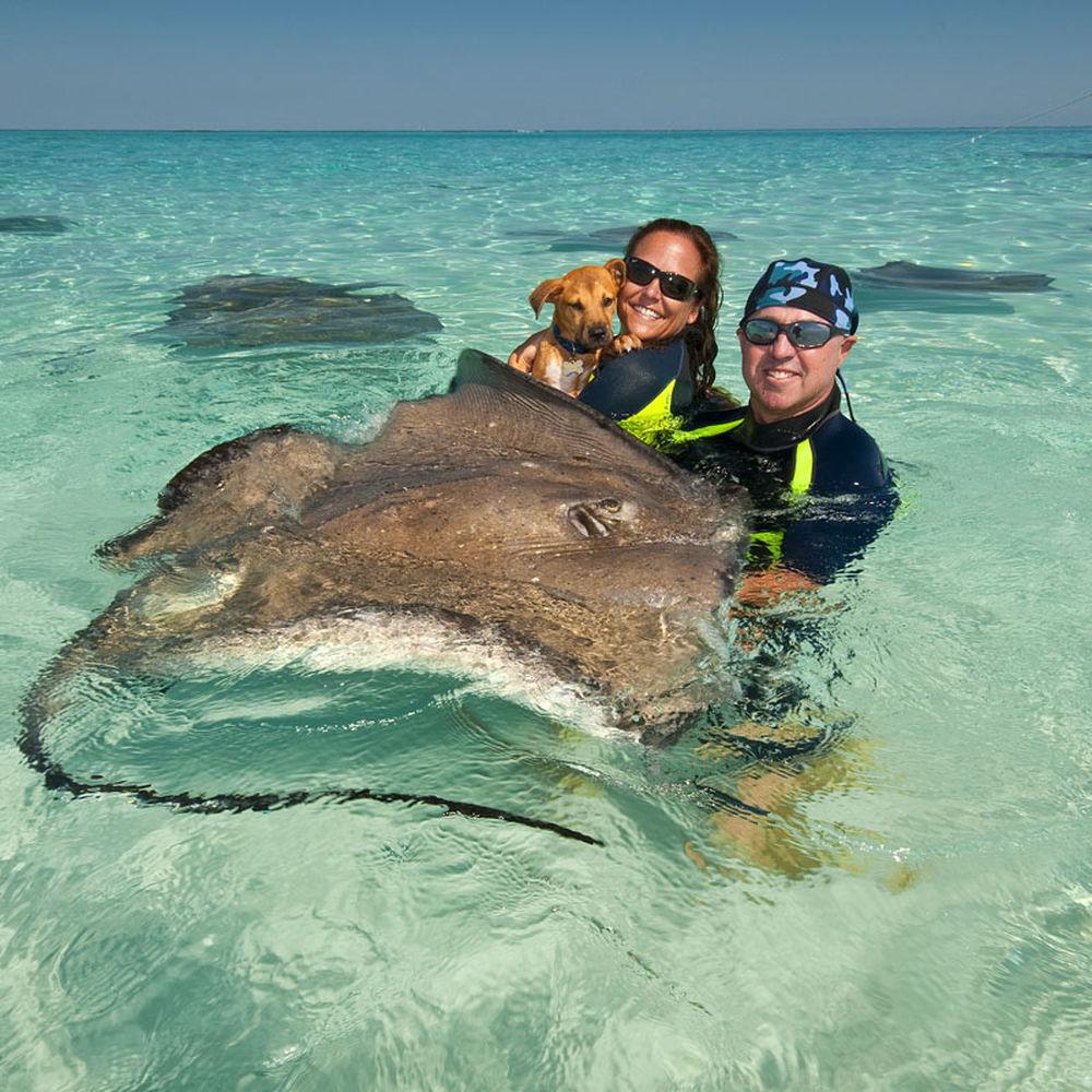 поплавать с животными