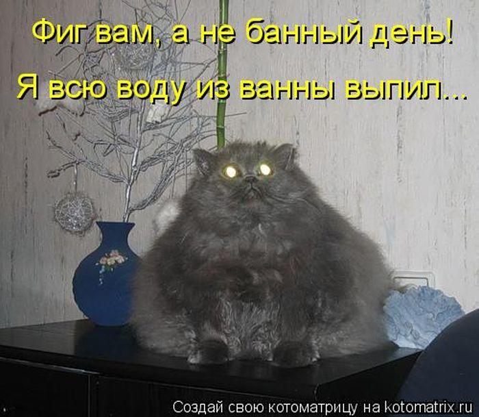 Лучшие котоматрицы за неделю