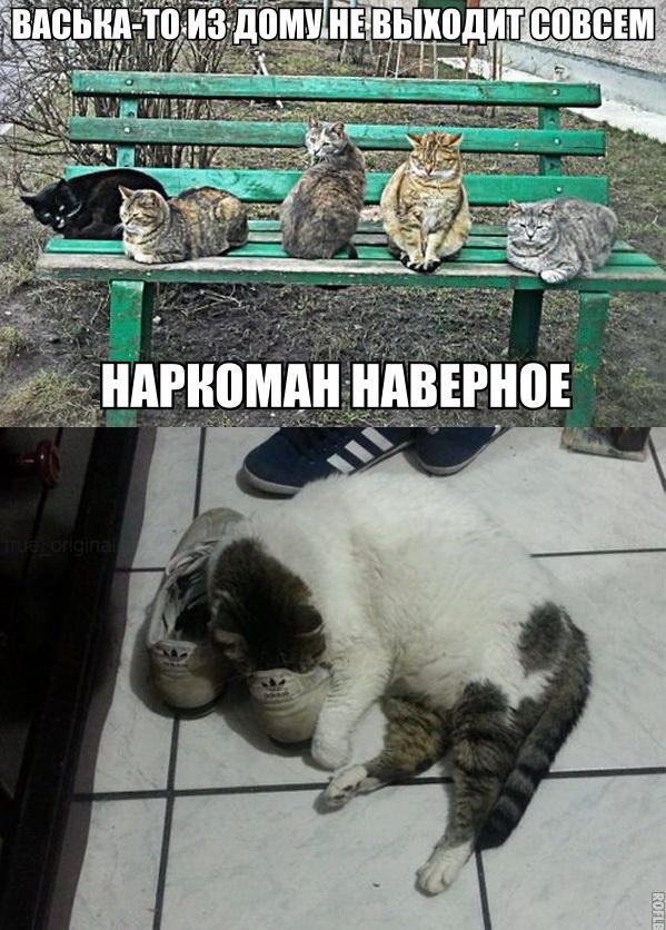 смешные, интересные и красивые фото