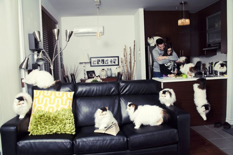 Люди, помешанные на кошках