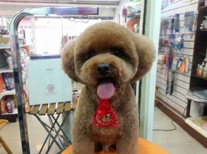 Новый модный тренд в Тайване