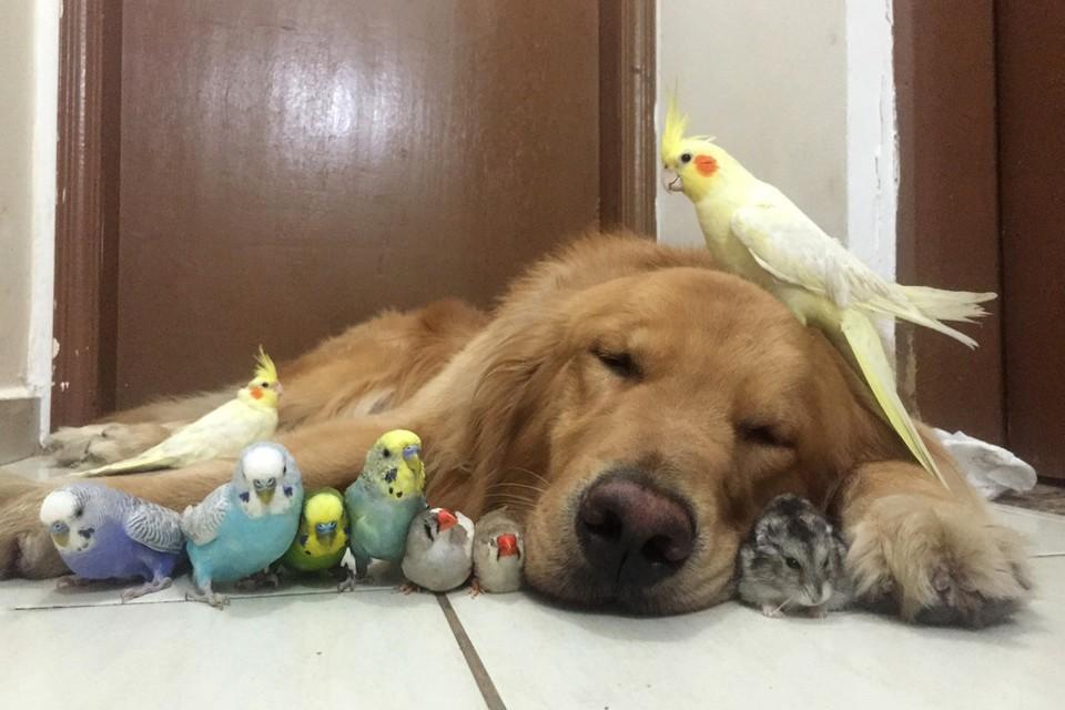 Ретривер Боб и его друзья