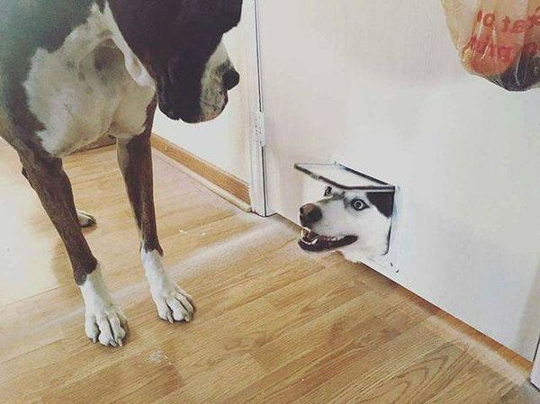 Funny animals  (50 photos)