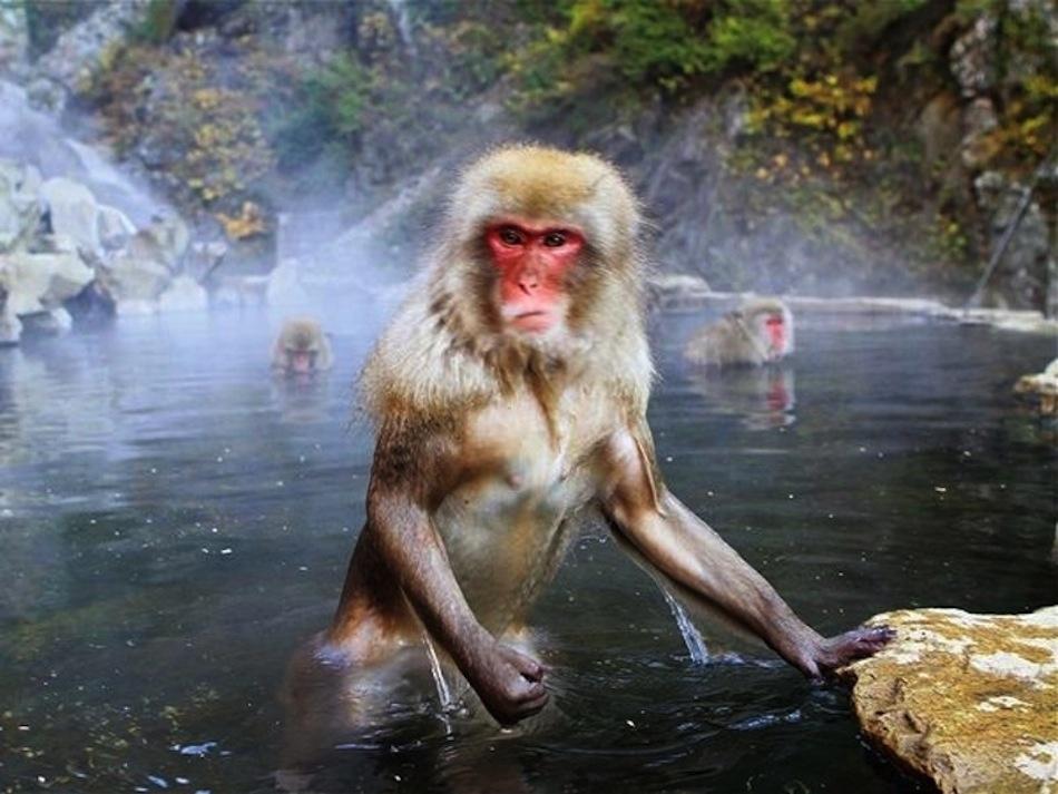 только обезьяны и вода картинки хожу вечеринки